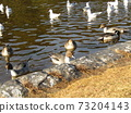 Winter migratory birds who came to Inagihama Park Park and Uricamome 73204143
