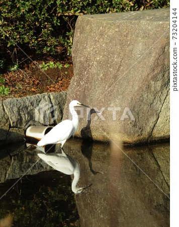 Little egret that came to the pond of Inage Seaside Park 73204144