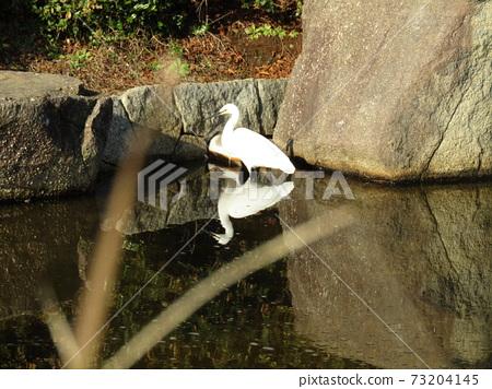 이나 게 해변 공원의 연못에 온 쇠백로 73204145