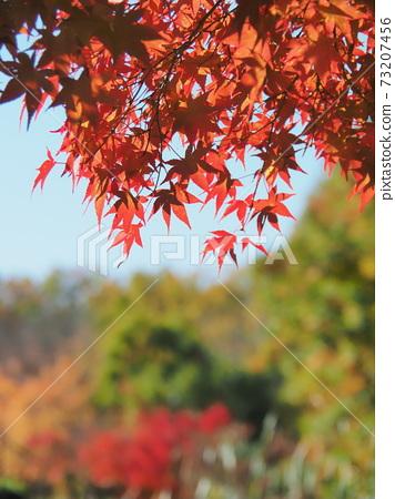 Autumn leaves 73207456