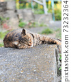 Kijitora stray cat lying on the ground 73232364
