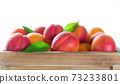 Fresh apricots on wooden table 73233801