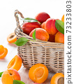 Fresh apricots on wooden table 73233803