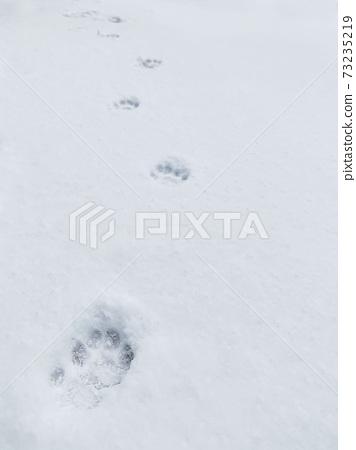 雪地裡的貓腳印 73235219