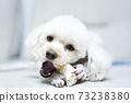푸들,뼈다귀,개뼈다귀,집,주택,한국 73238380