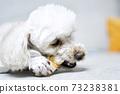 푸들,뼈다귀,개뼈다귀,집,주택,한국 73238381