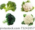 西蘭花和花椰菜 73242657