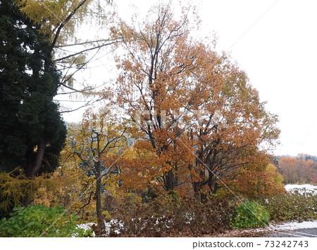 눈이 달려있는 큰 단풍 나무 73242743