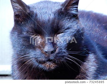 一隻陽光明媚的貓 73245895