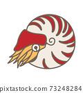 鸚鵡螺 73248284