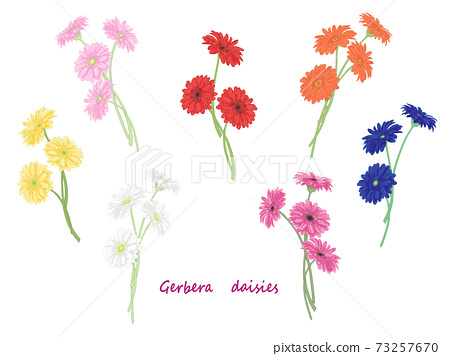 多彩多姿的非洲菊集 73257670