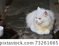 White cat in my home 73261665