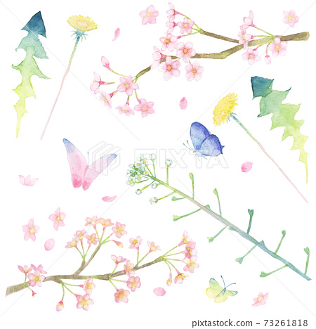 <Illustration collection> Illustration material collection of spring plants (cherry blossoms, dandelions, shepherd's purse) and butterflies drawn in watercolor 73261818