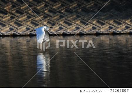 白鷺 野生鳥類 73265897