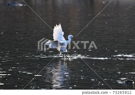 Egret wild birds 73265912