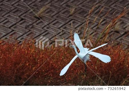 Egret wild birds 73265942