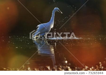 Egret wild birds 73265944
