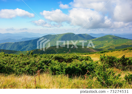 mountain landscape on a bright summer day. meadow in grass and plants on the hill. wonderful weather with fluffy clouds on the sky. chornohora ridge of carpathians 73274531