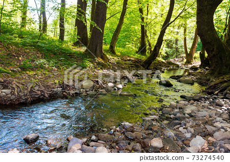 wild water stream in the forest. beautiful nature scenery on a sunny spring day. trees in vivid green foliage. stones on the shore. freshness of nature concept 73274540