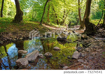 wild water stream in the forest. beautiful nature scenery on a sunny spring day. trees in vivid green foliage. stones on the shore. freshness of nature concept 73274541