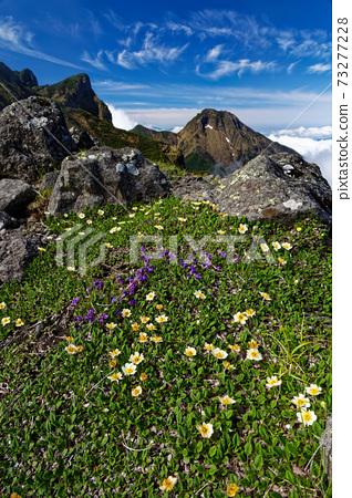 八嶽山脈,橫嶽山脊線和以大同為中心的高山上的高山植物 73277228