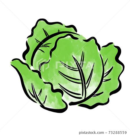 Lettuce illustration brush watercolor hand drawn 73288559