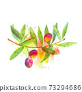 A watercolor drawing of a vibrant green olive tree branch with fruits, with a splash of paint 73294686