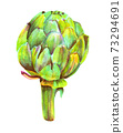 A watercolor drawing of a vibrant artichoke, isolated 73294691