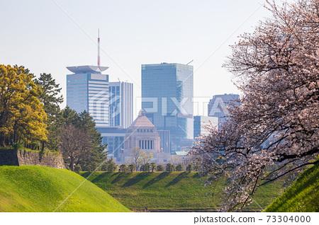 櫻花盛開和國會大廈 73304000