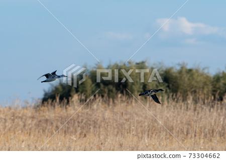 와 타라 세 유수지를 비행 미코아이사 73304662