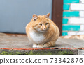 Red Cat Sitting on the Porch of the House 73342876