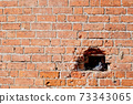 Pigeon couple sitting in the nest in the wall 73343065