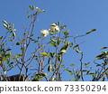 야츠 갯벌 공원 한 월의 장미 73350294