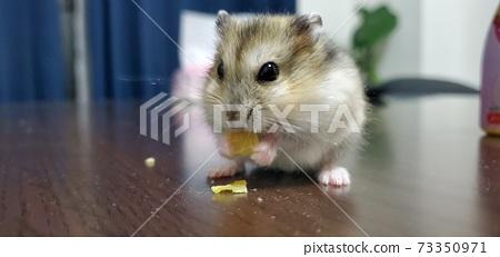 Hamster meal 73350971