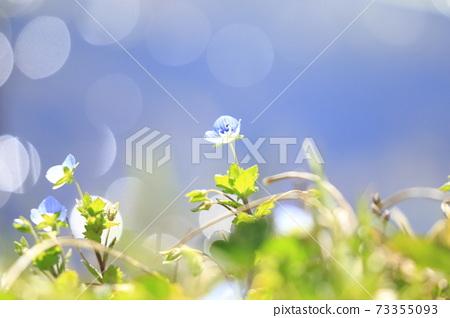 봄의 물가 오오이누노후부리 73355093