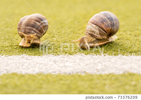 Two snails on the the start or finish line 73376209