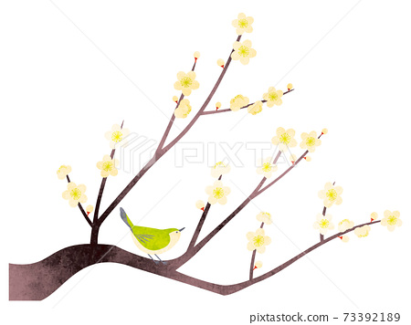 Illustration of watercolor-style white plum and white-eye 73392189