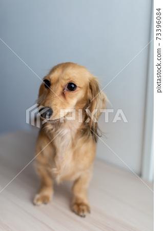 愛犬Kanin Hendax基金 73396084