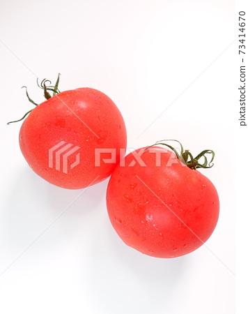 蕃茄 73414670