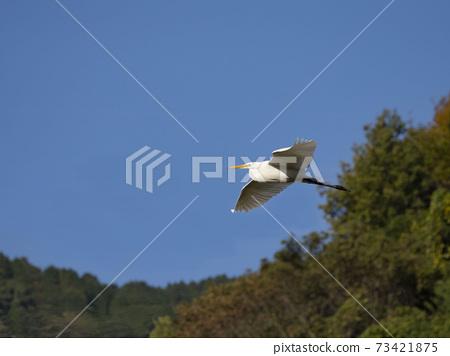 大輔的飛行 73421875