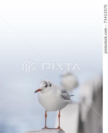 海鷗,百合海鷗,河欄杆,明亮的背景 73422070