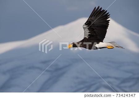 小鳥與知床山脈在後台飛翔 73424347