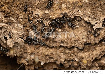 크로 말벌 둥지 제거 둥지 발굴 3 73426765