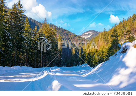winter landscape in synevir national park. beautiful nature scenery with fir trees along the snow covered road. wonderful sunny weather with clouds on the sky 73439081