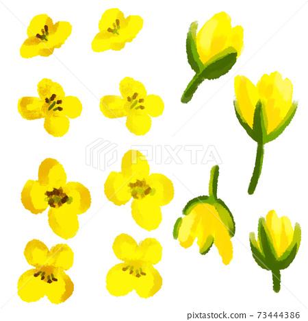 油菜芽和花的水彩插圖 73444386