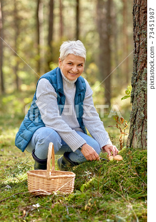 senior woman picking mushrooms in autumn forest 73451987