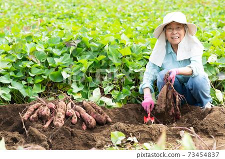 女高管挖紅薯 73454837