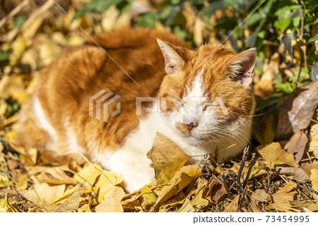 一隻貓在曬太陽的時候小睡 73454995