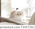 창가의 고양이 73457261