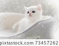 흰 새끼 고양이 73457262